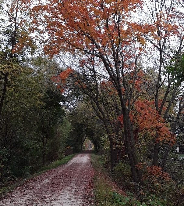 Autumn Reflections: Layers of Awareness