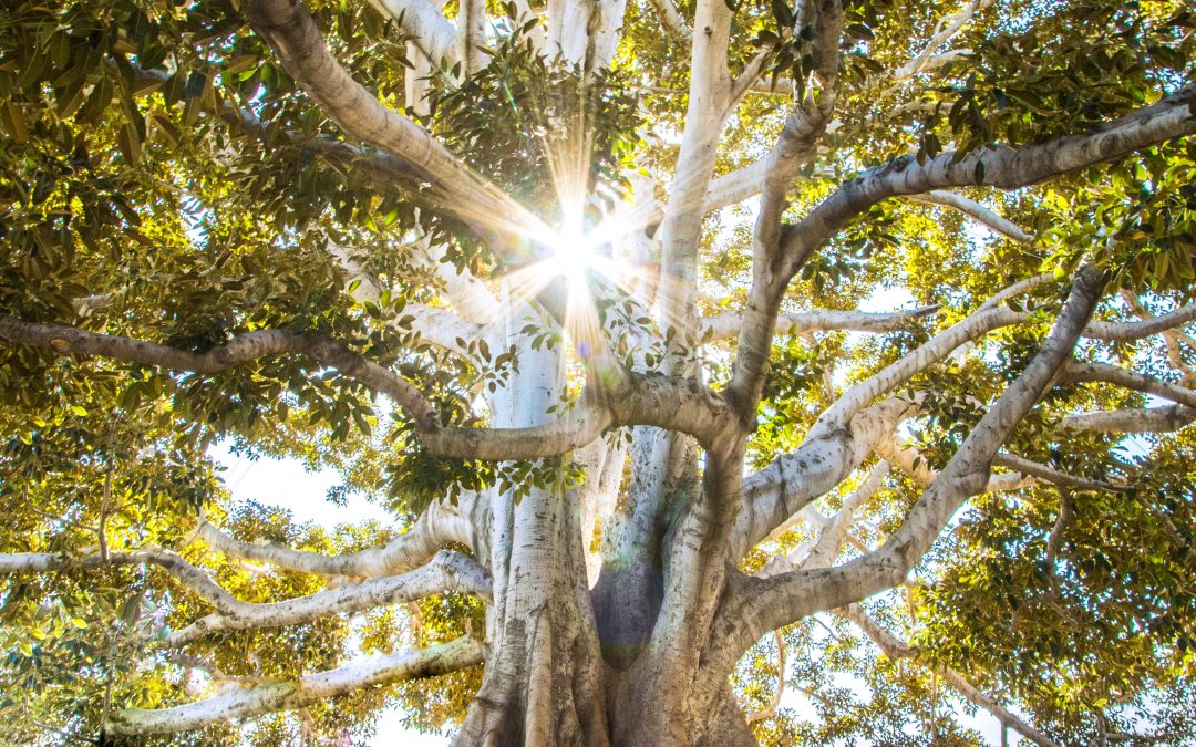 Cultivating and Nurturing Compassion in Times of Change and Conflict