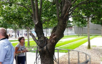 Finding God in Everyday Places: Survivor Tree Resilience Symbolizes Hope