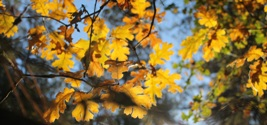 The Changing Seasons: Autumn is a Time of Transition